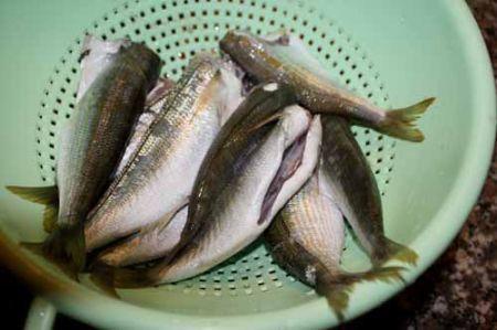 scolate i pesci