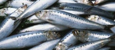 carpaccio di sardine