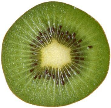 fetta di kiwi