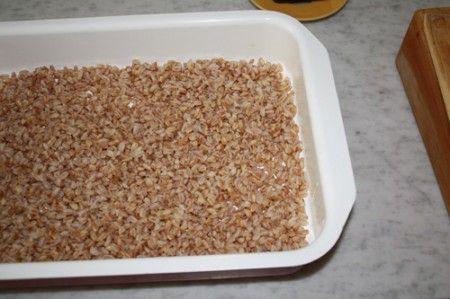torta salata farro 01