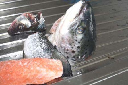 vellutata di pesce