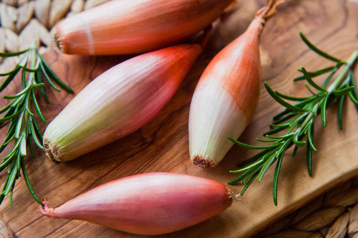 Scalogno: che cos'è, le caratteristiche e come usarlo in cucina