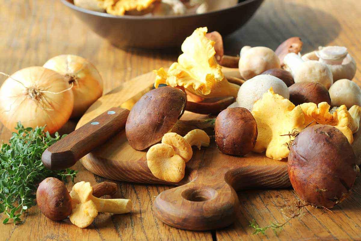 Tagliere con funghi porcini, funghi champignon, funghi giallarelli