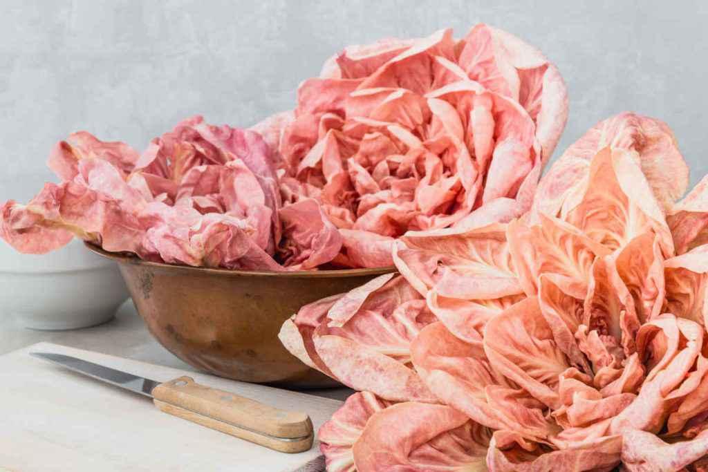 cespi di radicchio rosa