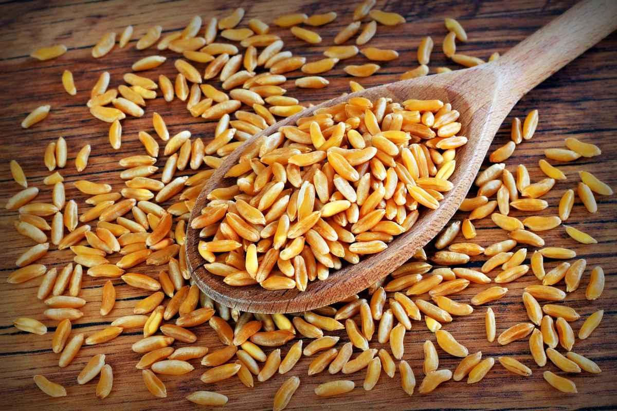 grano turanico Khorasan ricette kamut