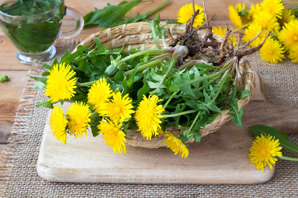Piante spontanee commestibili: come riconoscerle e cucinarle