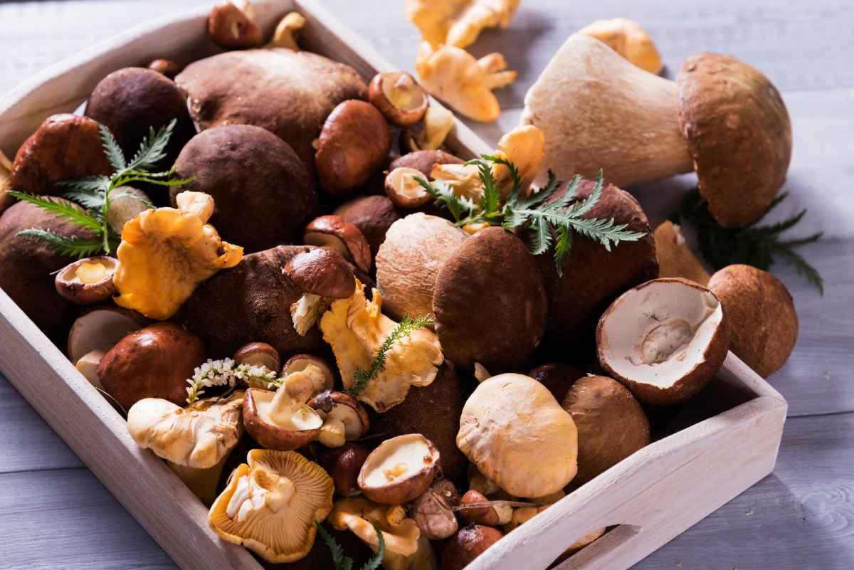 cesto di funghi misti, regole per la raccolta dei funghi