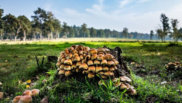 I funghi commestibili: come riconoscerli e cucinarli