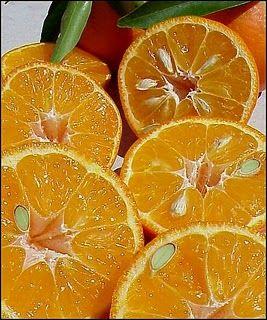 frittelle di mandarino