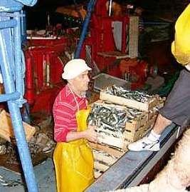 Pescatori di alici