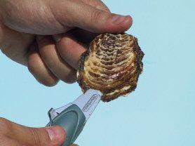 aprire l'ostrica