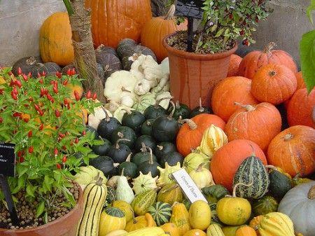 Verdure e ricette autunnali