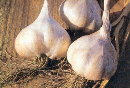 Bistecca all'aglio