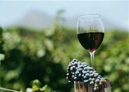 festa mieru vino salento