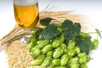 orzo per la produzione della birra