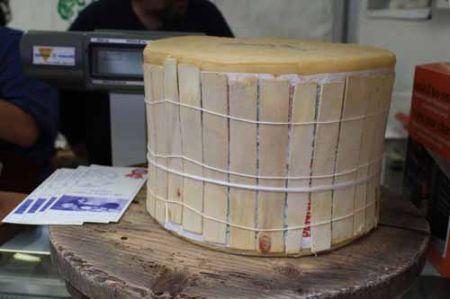cheese a Bra