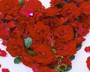 Petali di rose al forno