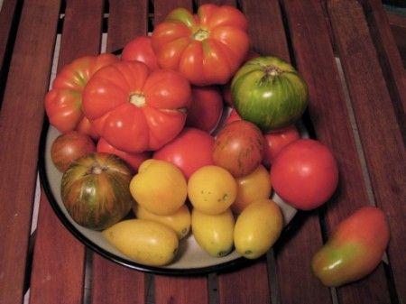 pomodori tipo