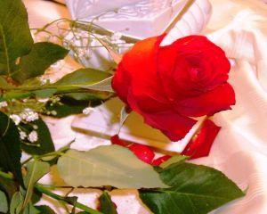 Elisir di rose per le mamme