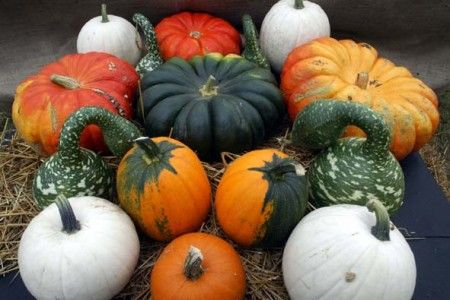 varie tipologie di zucca